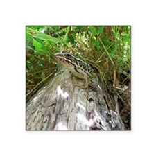 "Frog on a log Square Sticker 3"" x 3"""