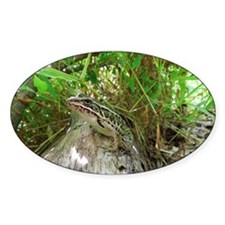 Frog on a log Decal