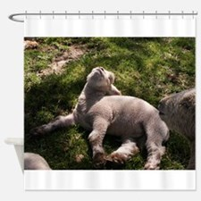 Snoozing Lamb Shower Curtain