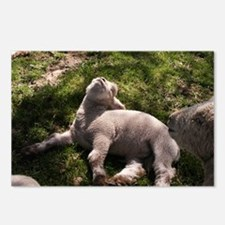 Snoozing Lamb Postcards (Package of 8)