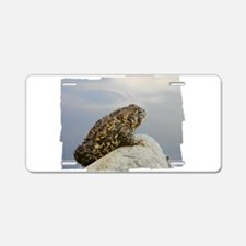 Pondering Toad Aluminum License Plate
