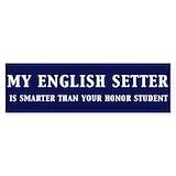English setter Single