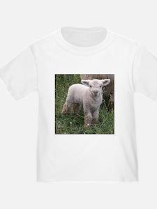 Cute Babydoll Lamb T