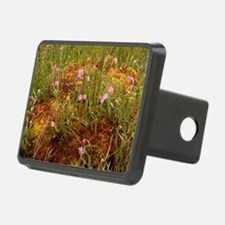 Cross-leaved heath and sphagnum moss - Hitch Cover