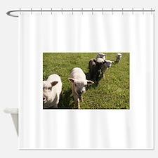 Friendly Lambs Shower Curtain