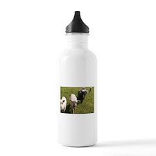 Friendly Lambs Water Bottle