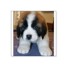 "Saint Bernard Puppy Square Sticker 3"" x 3"""