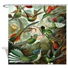 Vintage Haeckel Hummingbirds Shower Curtain