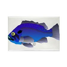 Blue Rockfish (Blue Perch) Scorpionfish fish Recta