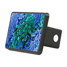 E. coli bacteria, SEM - Hitch Cover