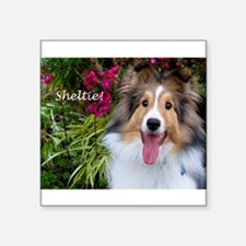 "Sheltie! Square Sticker 3"" x 3"""
