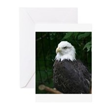 eagle Greeting Cards (Pk of 10)
