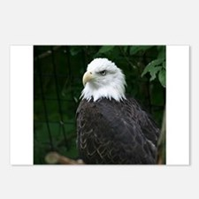 eagle Postcards (Package of 8)