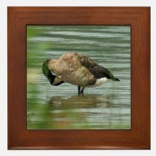 Canada Goose Preening Framed Tile