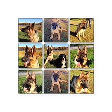 "Dog Park Set of 9 Square Sticker 3"" x 3"""