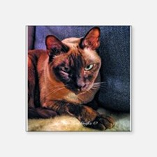 "Tonkinese on Blue Sofa Square Sticker 3"" x 3"""