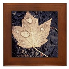 Autumn Leaf Tile Framed Tile