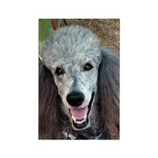 Smiling SIlver Poodle Rectangle Magnet