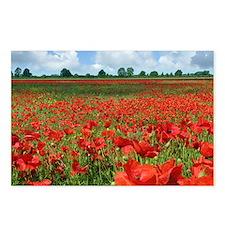 Poppy Fields Postcards (Package of 8)