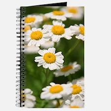 Cute Beautiful flower photography Journal