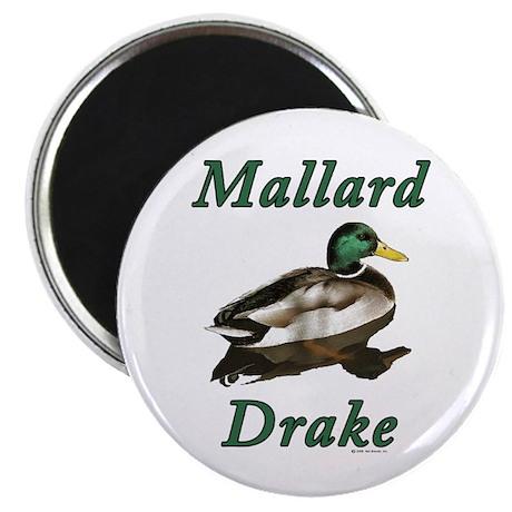 """Mallard Drake 2.25"""" Magnet (100 pack)"""