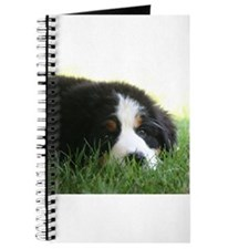 Bernese Puppy Journal