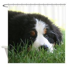 Bernese Puppy Shower Curtain