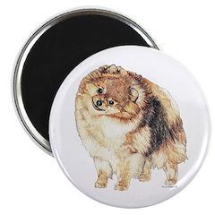 Pomeranian Pom Dog 2.25