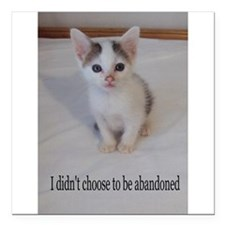 Support abandoned animals-I didn't choose Square C