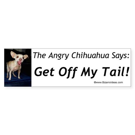 Angry Chihuahua Bumper Sticker