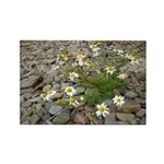 Daisies on the Beach Rectangle Magnet