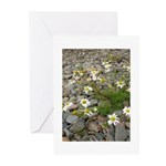 Daisies on the Beach Greeting Cards (Pk of 10)