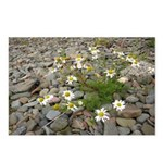 Daisies on the Beach Postcards (Package of 8)
