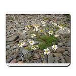 Daisies on the Beach Mousepad