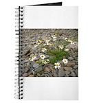 Daisies on the Beach Journal