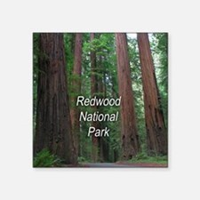 "Redwood National Park Square Sticker 3"" x 3"""