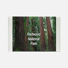 Redwood National Park Rectangle Magnet