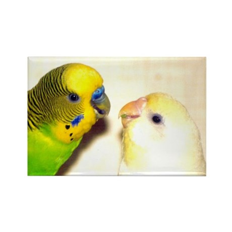 PARAKEETS LOOK OF LOVE Rectangle Magnet (10 pack)