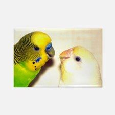 PARAKEETS LOOK OF LOVE Rectangle Magnet
