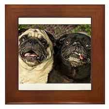 Pug Pair Framed Tile