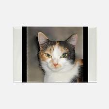 Heystack Kitty Rectangle Magnet