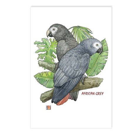Tropical Greys Postcards (Package of 8)