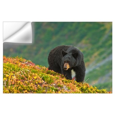 A black bear foraging for berries on a hillside ne Wall Decal