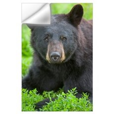 Portrait of a Black Bear at the Alaska Wildlife Co Wall Decal