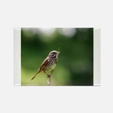 Song Sparrow Rectangle Magnet