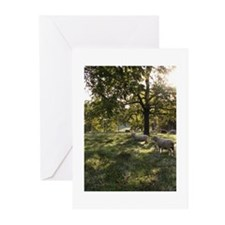 Green Pastures Greeting Cards (Pk of 20)