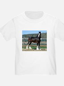 Ruskington Danny, English Shire Stallion T