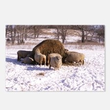 Ewes Very Fluffy! Postcards (Package of 8)