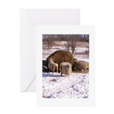 Ewes Very Fluffy! Greeting Card