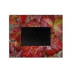 Red Poison Oak Leaves Picture Frame